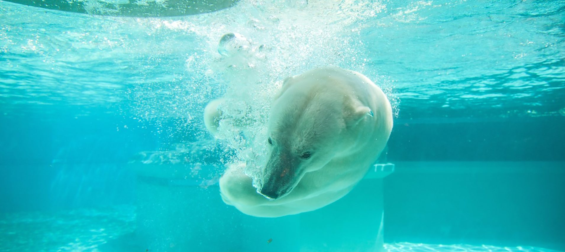Access and ticketing for the zoo/aquarium sector